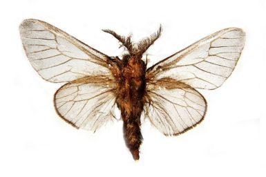Unplacedtogenus photidias